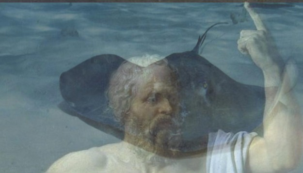 Socrates as stingray